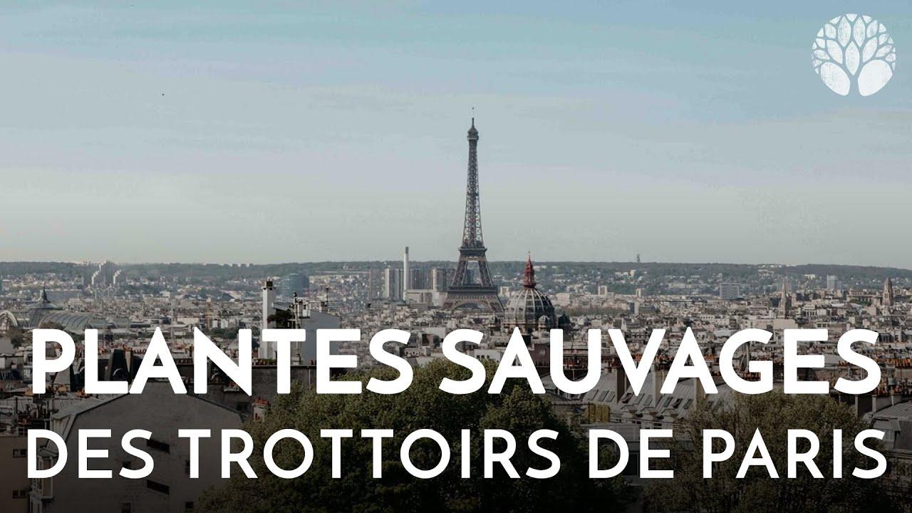 Plantes sauvages des rues de Paris