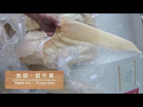 [海味系列] 魚翅 - 製作篇 Shark Fin - Production