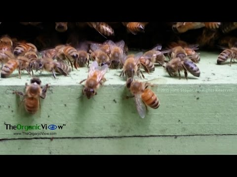 Bee Theft, Zika Virus, Cuban Honey, Aldi's ban, Senate Bill Disaster