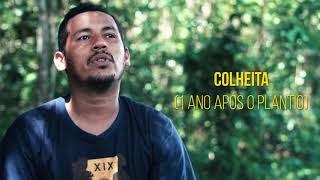 Como é feita a farinha de mandioca | Soluções para a Sustentabilidade