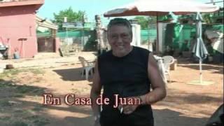 El palomo Valenciano Antiguo ( I tomo de video en casa de Juan Carlos)