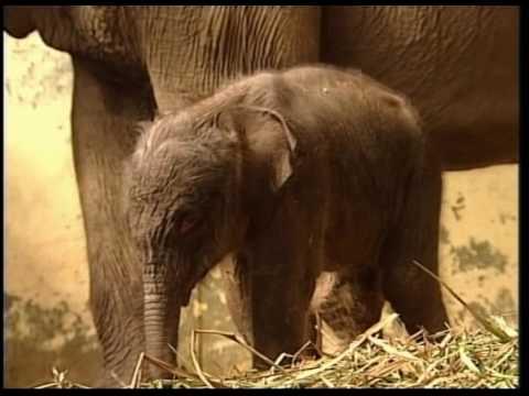 ANIMALIA #2 Walrus birth | Baby elephant | Cat fashion show
