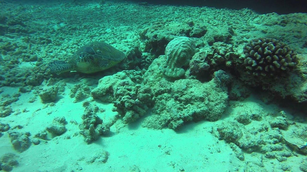 Cute Sea Turtle Missing Fin Youtube