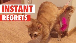 Instant Regret Pets | Funny Pet Video Compilation