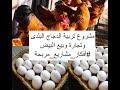 مشروع تربية الدجاج البلدي وبيع البيض البلدي - مشروع سهل ومربح بأكثر من اتجاه #أفكار_مشاريع_شباب