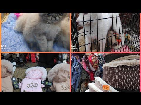 Рынок Садовод Животные и всё для Животных цены.
