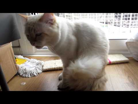 Cat Eats Rubber Band