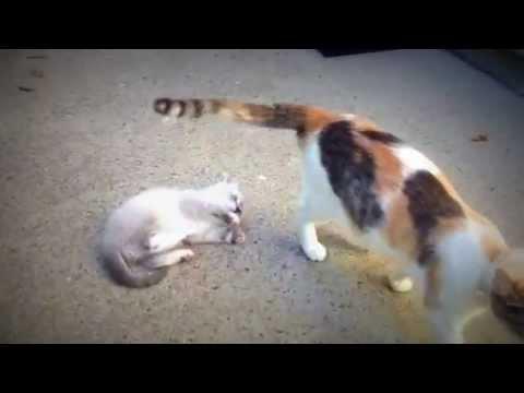 Mother Cat Punishing Baby Kitten