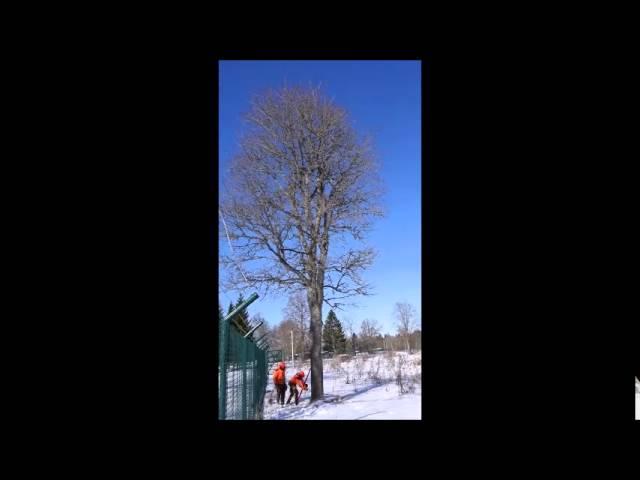 Ohtlike puude raie ja langetamine
