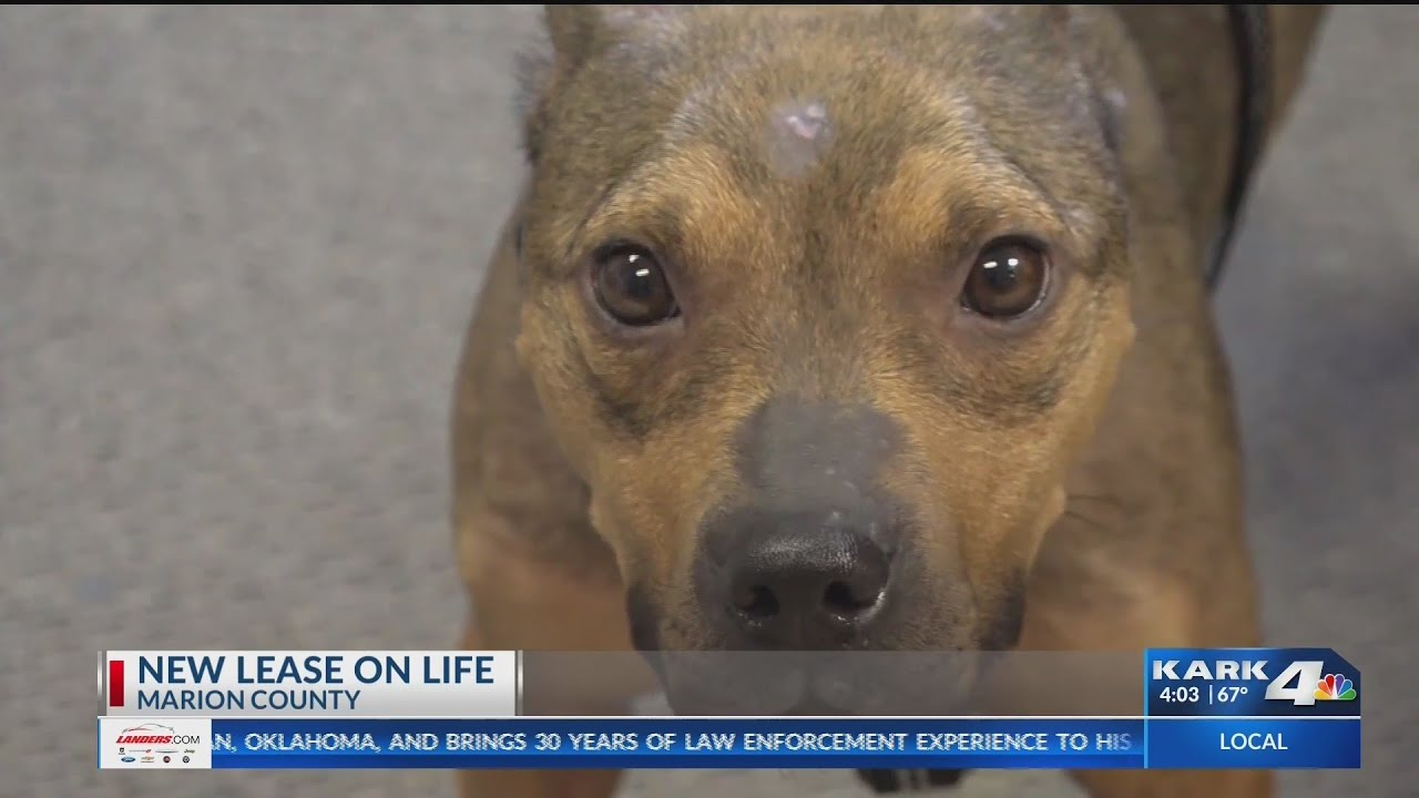 Firefighters rescue starving dog in Marion County