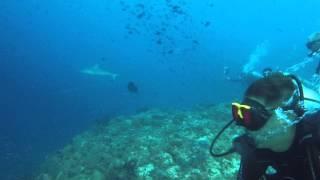 maldives dave shark photobomb 1