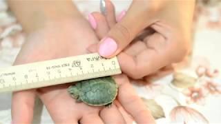 Сколько лет нашим черепахам?) Ответ здесь)