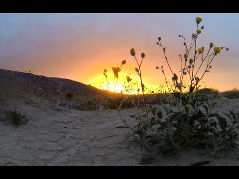 1+ hour Flower Meditation over Beautiful Desert Anza Borrego California