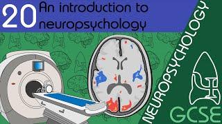 Introduction to neuropsychology - Neuropsychology, GCSE Psychology [AQA]