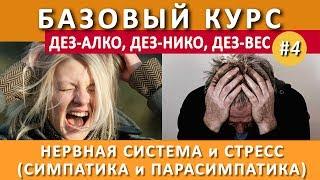#4. Стресс и Автономная Нервная Система. Симпатика и парасимпатика
