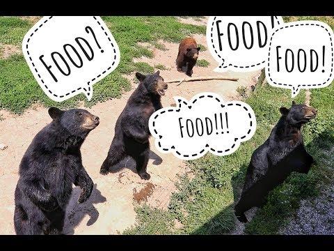 Where to find bears in Yellowstone? ( Bear World Yellowstone)