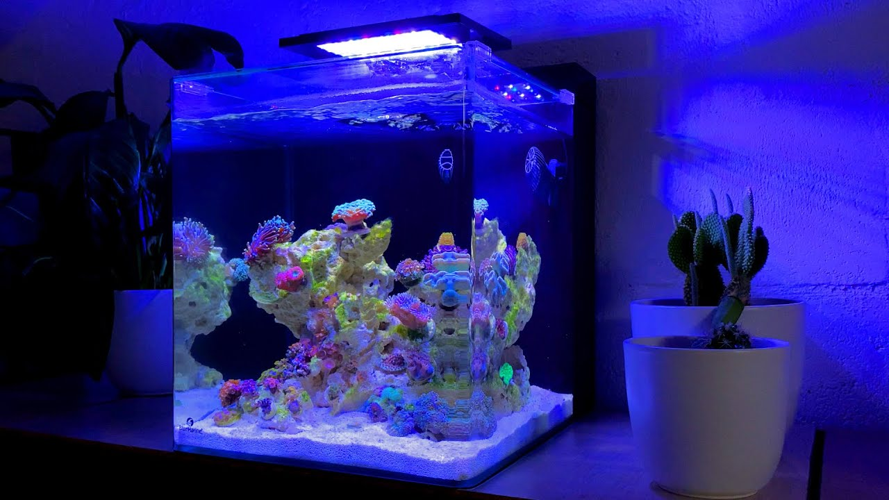 Unboxing Coral Frags and Fish from Coralaxy