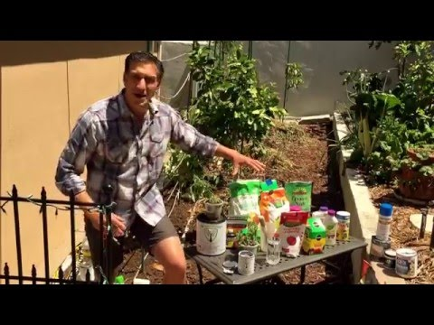 TOMATO TIPS--DAY 1: Organic vs. Inorganic Gardening | IV Organic Sunblock | Vertical Garden + MORE