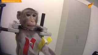 Nieludzkie traktowanie zwierząt w niemieckim laboratorium