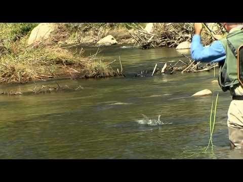 Dry Fly Fishing - Up Stream Presentations