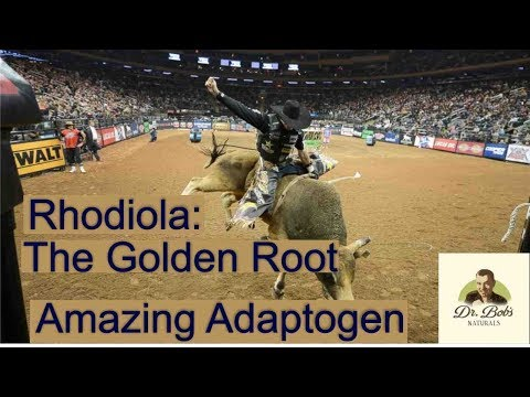 Rhodiola: The Golden Root - Amazing Adaptogen