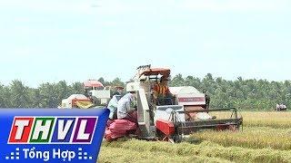 THVL | Nông nghiệp bền vững: Điểm sáng Hợp tác xã Nông nghiệp Rạch Lọp