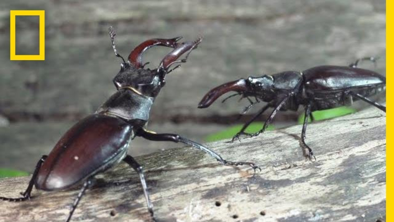 Peek Inside the Strange, Secret World of Bugs | Short Film Showcase