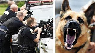 Polizeihund springt in Kugelhagel und wird als Held gefeiert!
