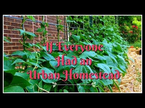 If Everyone Had an Urban Homestead!