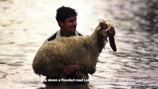 21 breathtaking moments when animal stuck in flooded area