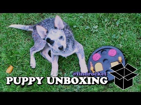 Puppy Unboxing #6 - Puzzle