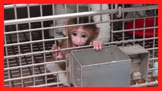 These Experiments Will Break Your Heart