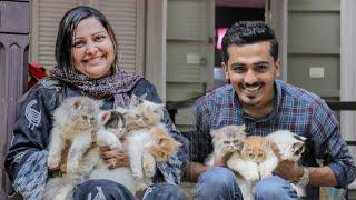 പൂച്ചകൾക്ക് വേണ്ടി മാത്രം ജീവിക്കുന്ന സൈറാബാനു 😍! Persian Cats Collection of Saira Banu