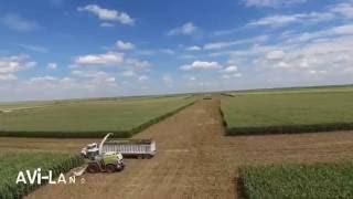 Corn Harvest 2016 @ Avi-lanche Jerseys