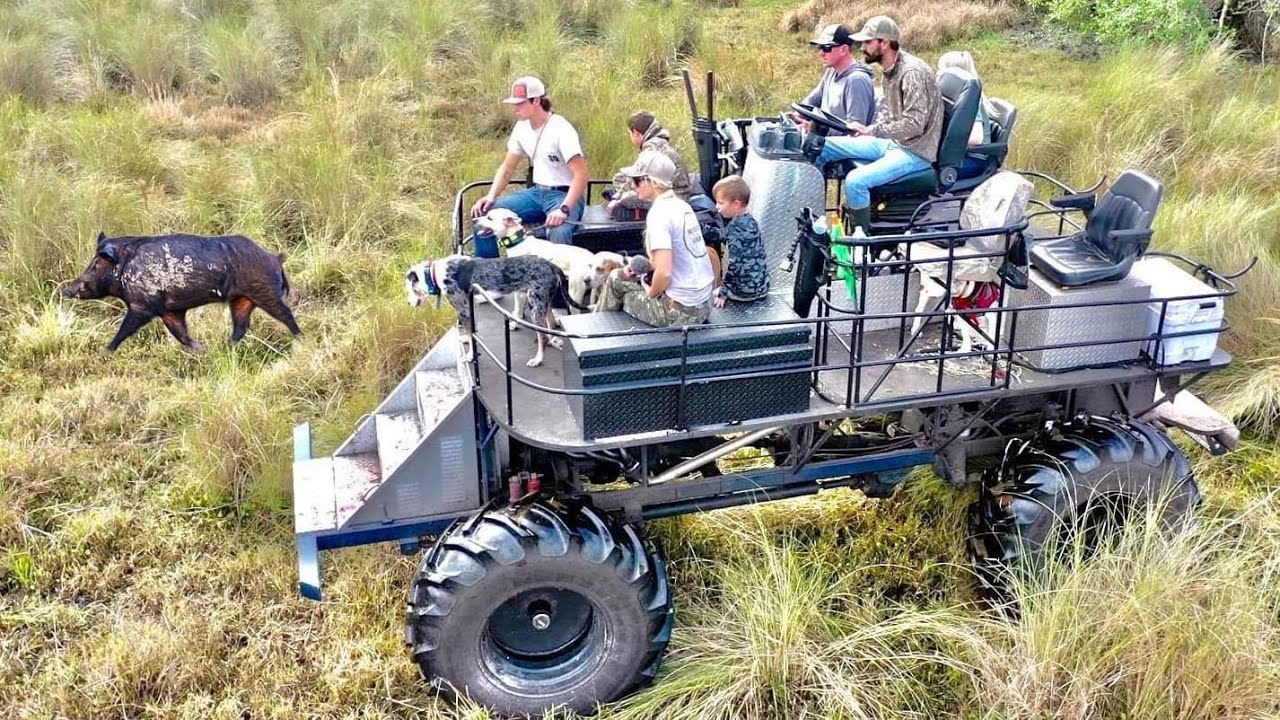 Catching *WILD HOGS* with DOGS  off a GIANT SWAMP BUGGY (Catch & Cook Bluegabe Style) - download from YouTube for free