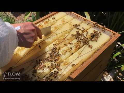 Inspecting Flow Frames - Flow Hive 🍯🐝 [LIVE]