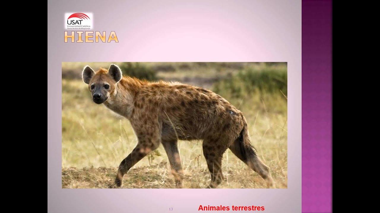 animales terrestres - photo #6