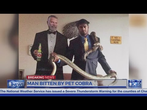 NC man bitten by cobra in critical condition; anti-venom administered