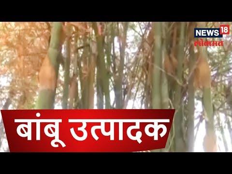 बांबू उत्पादक शेतकऱ्याची अनोखी यशोगाथा | ANNADATA | 2 DEC 2018 | NEWS18  LOKMAT