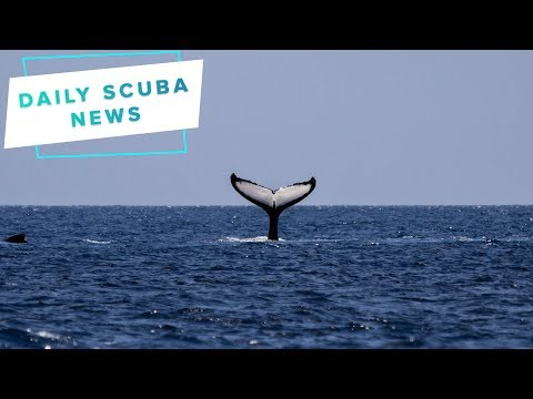 Daily Scuba News – The UK Is A Service Station For Whales