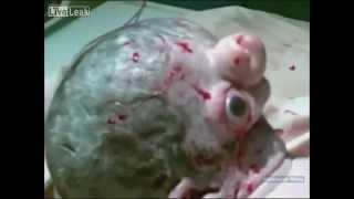 Новорожденный в Египте