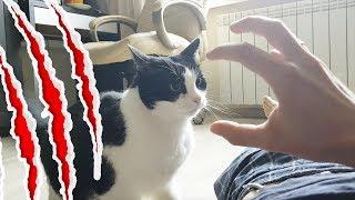 保護猫のプーシク、ご主人の腕を相手に仁義なき戦いを繰り広げる(引っかき傷注意)