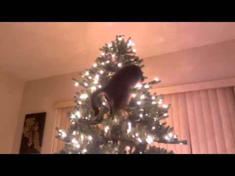 Thumbnail for Cat Video Cat Christmas Tree Disaster