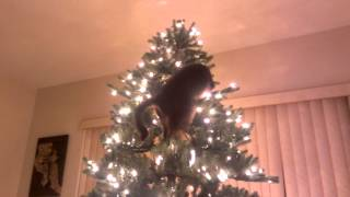 Cat Christmas Tree Disaster