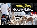 Mad Stray Dogs Bites 49 People In Hyderabad   Victims Face To Face With hmtv