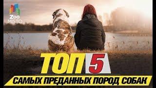 Топ 5 самых преданных пород собак\ Top 5 Most Loved Dog Breeds
