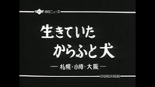 昭和基地で生きていたタローとジロー(カラフト犬)。 ※当時の音声オリ...