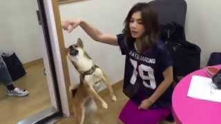 Ella Chen 陈嘉桦 dog training failed