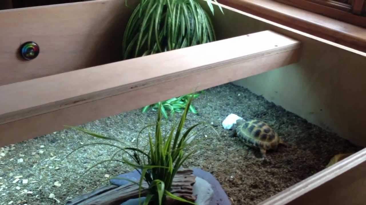 Horsfield Tortoise Table And Care Youtube