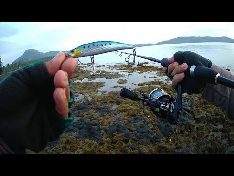 Cheap Lure But Effective. MEDIUM LIGHT FISHING. Inshore Fishing.